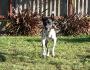 Yukon - einer der beiden Hostelhunde